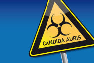 candida auris warning sign